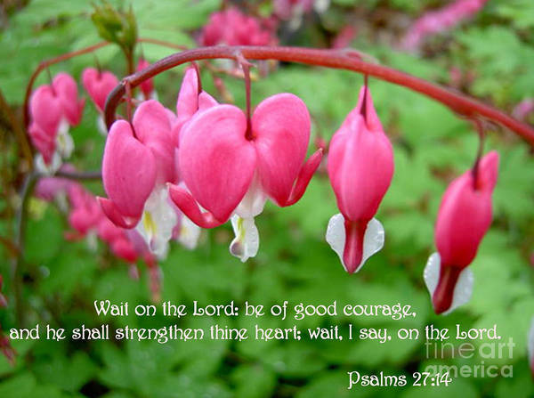 Flowers Poster featuring the photograph Psalms 27 14 Bleeding Hearts by Sara Raber