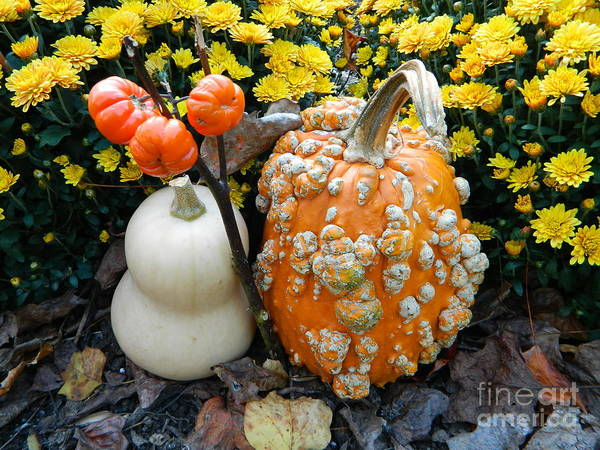 Pumpkin And Squash Poster featuring the photograph Pumpkin And Squash by Emmy Vickers