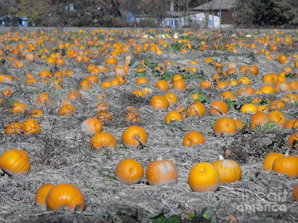 Pumpkins Poster featuring the photograph Pumpkin Patch by Jaden Norton