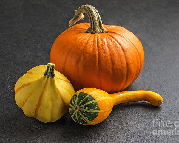Pumpkin Poster featuring the photograph Pumpkins On A Slate Plate by Palatia Photo