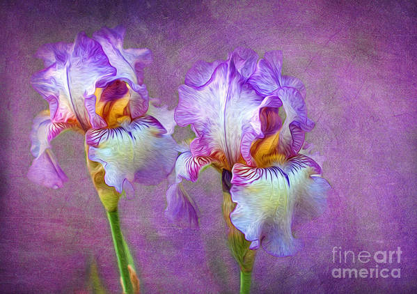 Iris Poster featuring the photograph Purple Iris by Lena Auxier
