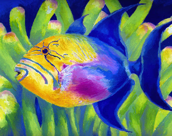 Underwater Poster featuring the painting Queen Triggerfish by Stephen Anderson
