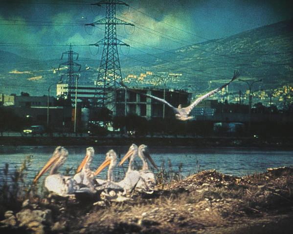 Birds Poster featuring the photograph Radioactive Days by Taylan Apukovska