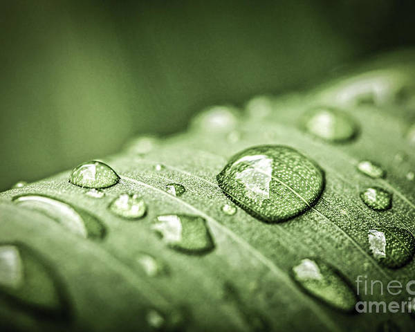 Plant Poster featuring the photograph Rain Drops On Green Leaf by Elena Elisseeva