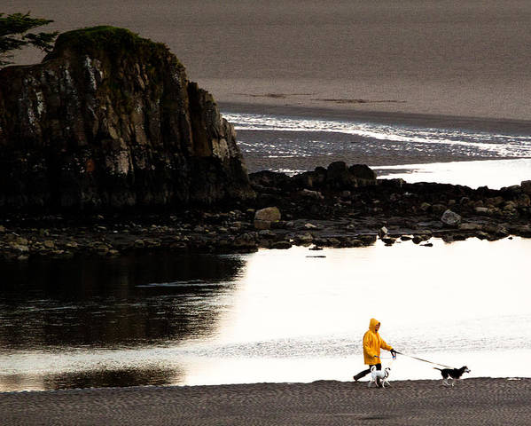 Raincoat Poster featuring the photograph Raincoat Dog Walk by John Daly