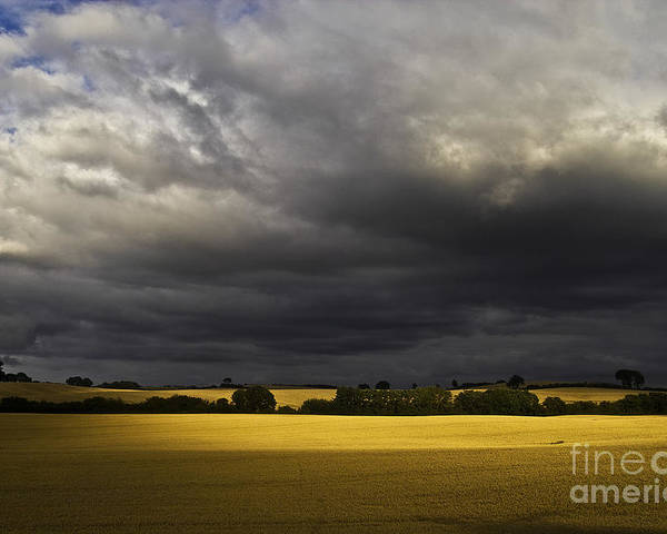 Rapefield Poster featuring the photograph Rapefield Under Dark Sky by Heiko Koehrer-Wagner