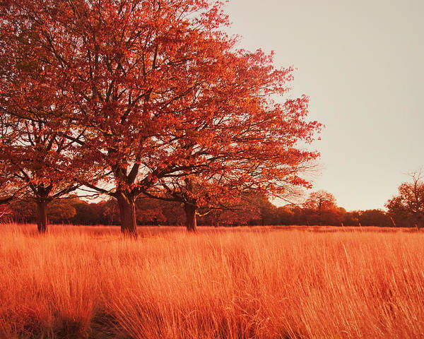 Autumn Poster featuring the photograph Red Autumn by Violet Gray