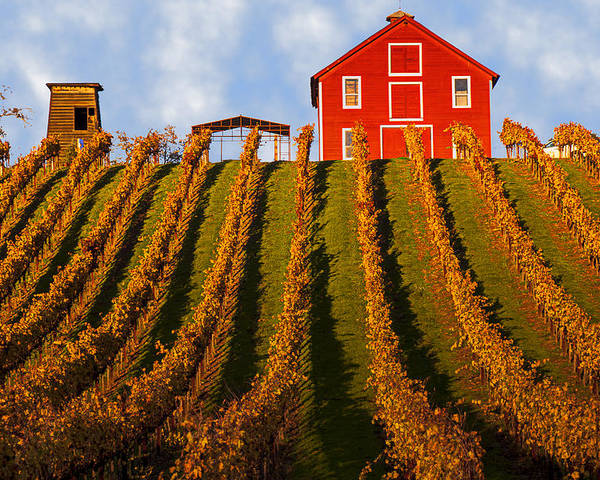 Red Poster featuring the photograph Red Barn In Autumn Vineyards by Garry Gay