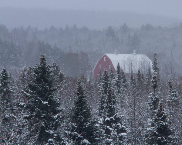 Barn Poster featuring the photograph Red Barn In Maine by Jack Zievis