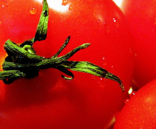 Tomato Poster featuring the photograph Red Hot Tomato by Karen Wiles