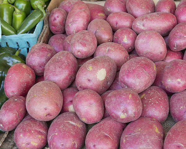 Red Poster featuring the photograph Red Skin Potatoes Stall Display by JPLDesigns