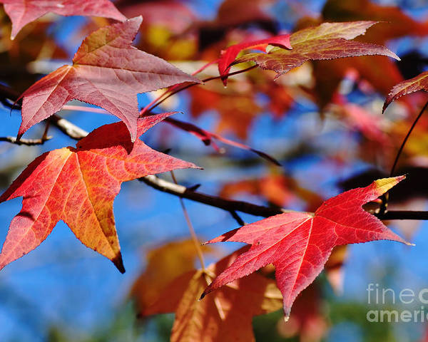 Photography Poster featuring the photograph Reds Of Autumn by Kaye Menner