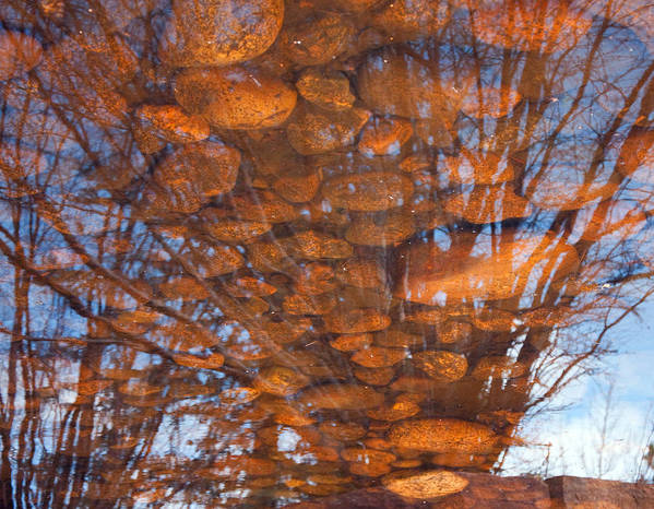 Pond Poster featuring the photograph Reflections by Eric Rundle