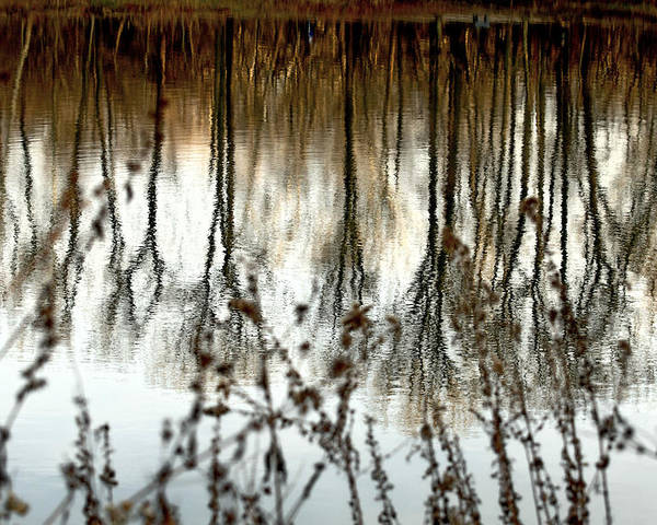 Water Poster featuring the photograph Reflections by Joanne Beebe