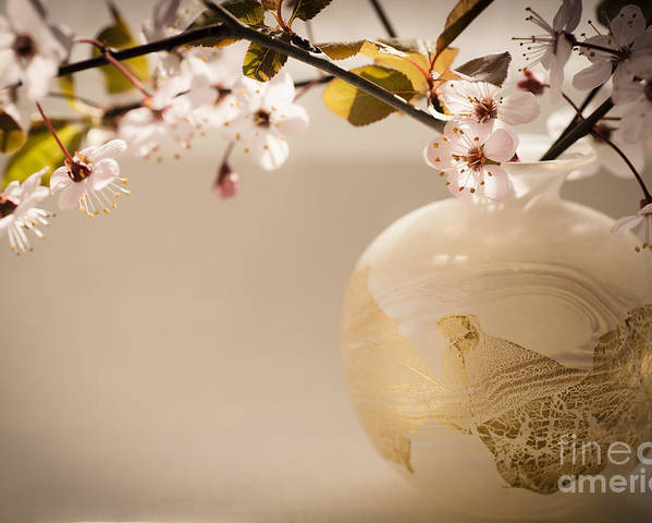 Cherry Blossom Poster featuring the photograph Renewal by Jan Bickerton