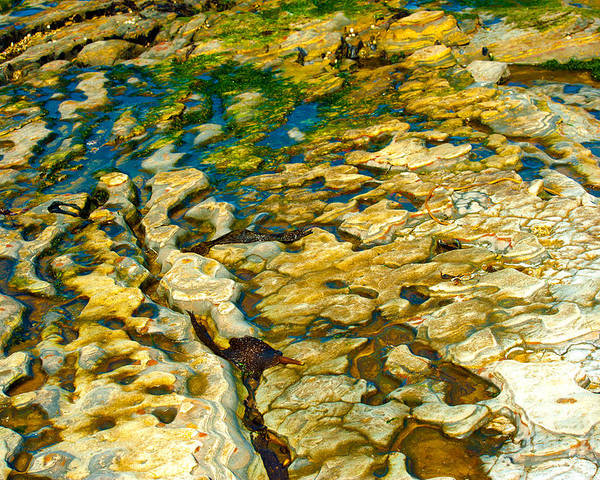 Abstract Nature Poster featuring the photograph Ripples In Time by Artist and Photographer Laura Wrede
