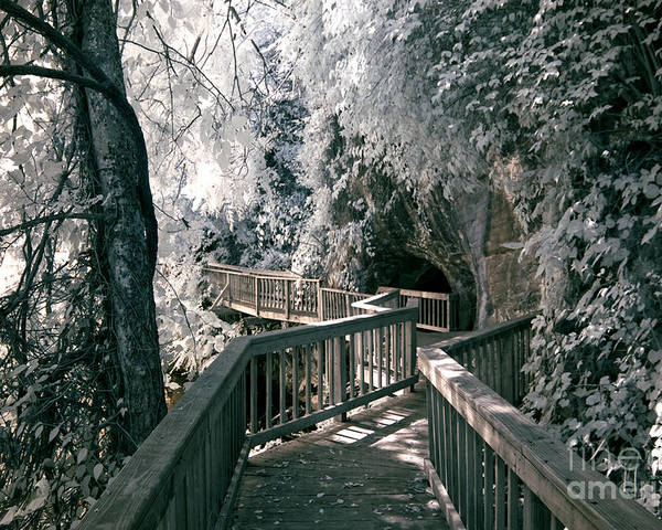 Infrared Poster featuring the photograph River Boardwalk by Paul W Faust - Impressions of Light