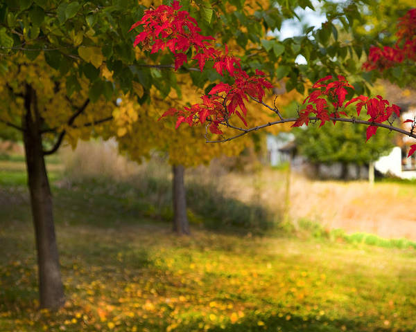 Autumn Poster featuring the photograph Riverbend Orchard by Theresa Tahara