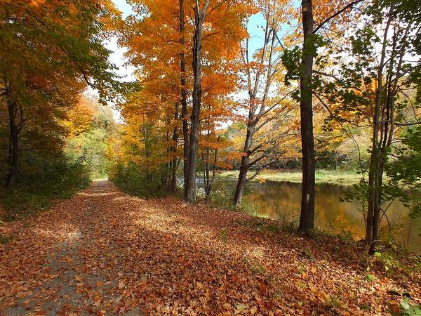 New England Poster featuring the photograph Riverside Colors 5 by Gene Cyr