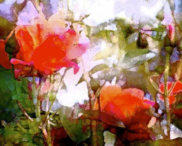 Floral Poster featuring the photograph Rose 204 by Pamela Cooper