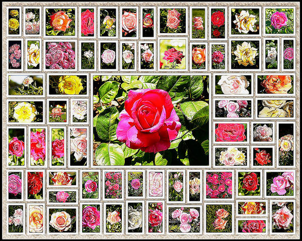 Roses Collage Poster featuring the painting Roses Collage 2 - Painted by Stefano Senise