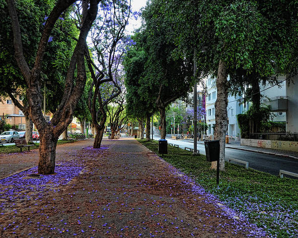 Foliage Poster featuring the photograph Rothschild Boulevard by Ron Shoshani