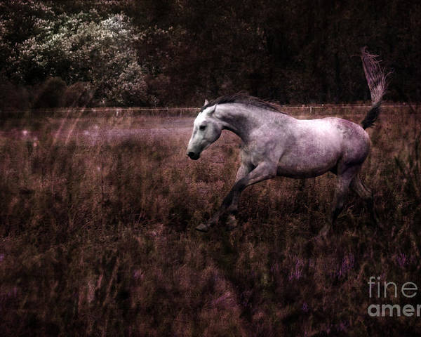 Grey Horse Poster featuring the photograph Running Through The Purple World by Angel Ciesniarska