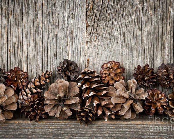 Wood Poster featuring the photograph Rustic Wood With Pine Cones by Elena Elisseeva