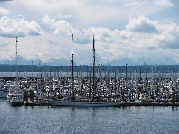 Ransportation Poster featuring the photograph Sailboats In Seattle by Steven Parker