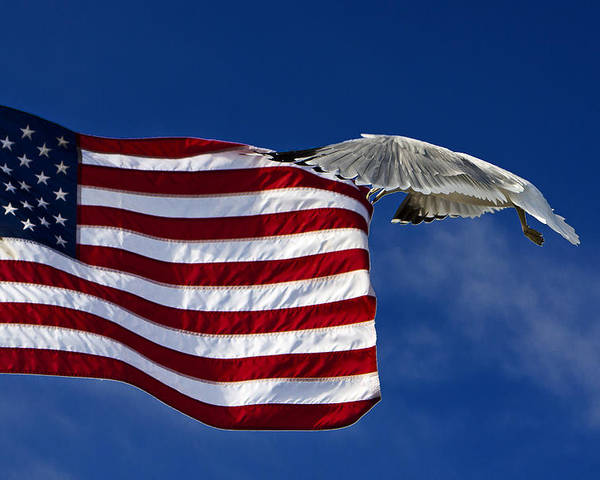 Flag Poster featuring the photograph Salute The Flag by Tim Wilson