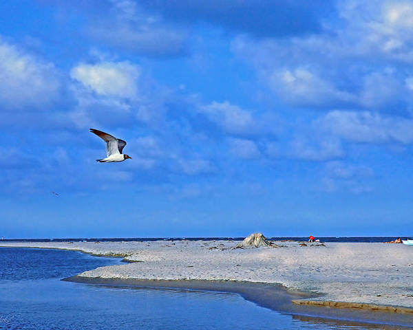 Seagull Poster featuring the photograph Sandbar Bliss by Marie Hicks