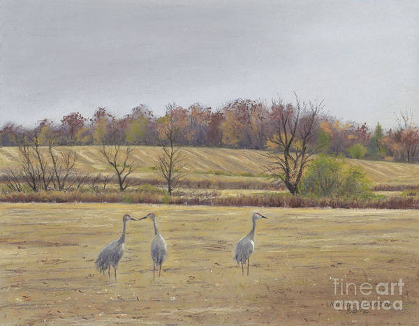 Sandhill Cranes Poster featuring the painting Sandhill Cranes Feeding In Field by Jymme Golden