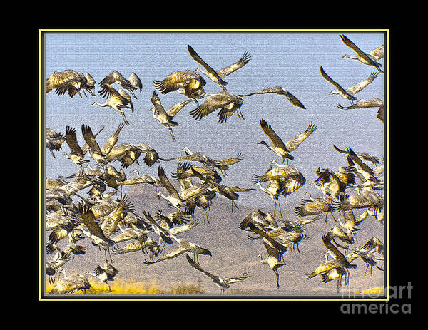Bird Poster featuring the photograph Sandhill Cranes Startled 2 by Larry White