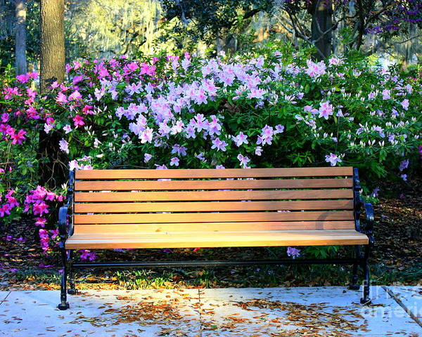 Savannah Poster featuring the photograph Savannah Bench by Carol Groenen