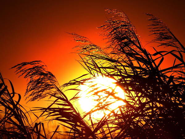 Sunset Poster featuring the photograph Sawgrass Sunset by Ines Ganteaume