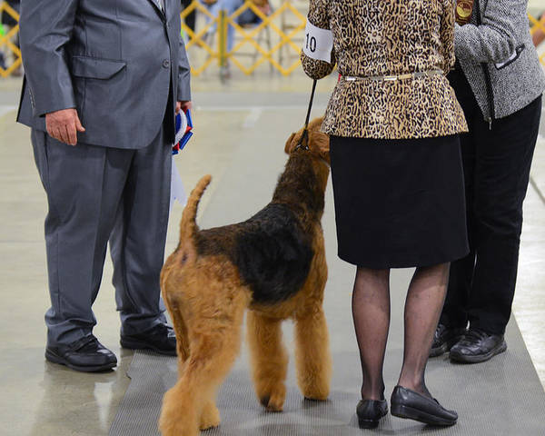 2015. Judge: Mr. Del Richards Poster featuring the photograph Scvkc Best In Show by Dog Show Video