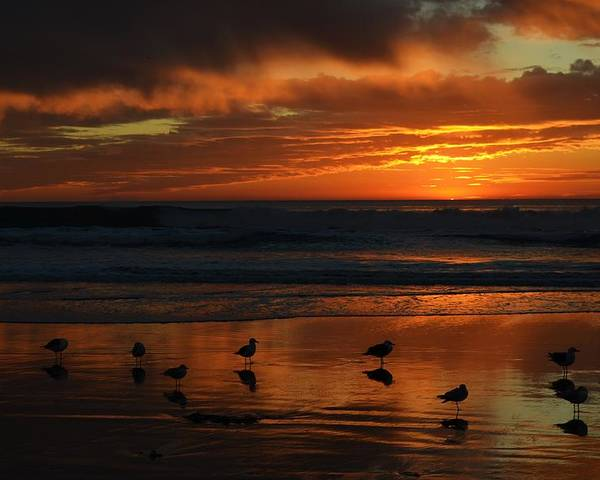 Sky Poster featuring the photograph Sea Birds Leucadia Ca 2013 by Alfredo Martinez