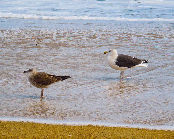 Sea Gulls Poster featuring the photograph Sea Gull Pair by Donna Shaw