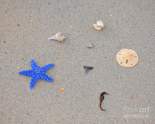 Sea Star Poster featuring the photograph Sea Swag - Dark Blue by Al Powell Photography USA