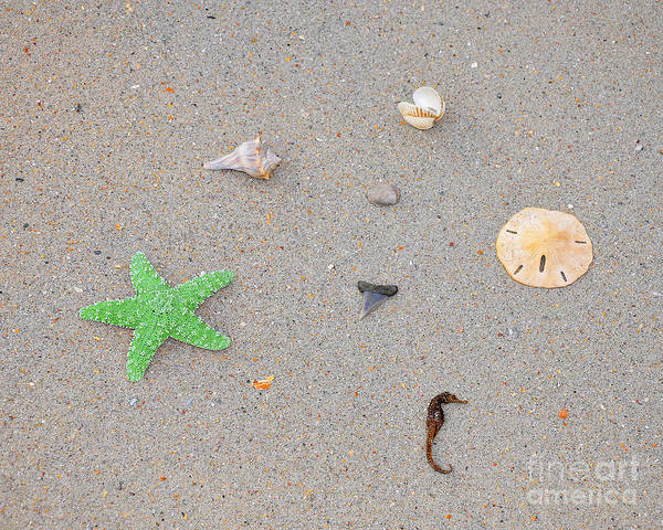 Sea Star Poster featuring the photograph Sea Swag - Green by Al Powell Photography USA