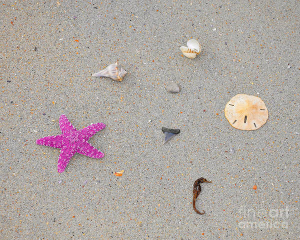 Sea Star Poster featuring the photograph Sea Swag - Pink by Al Powell Photography USA