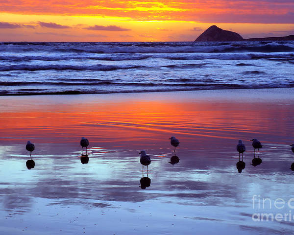 Sunset Poster featuring the photograph Seagulls by Colin Woods