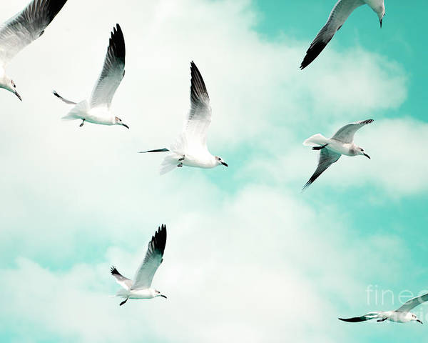 Seagull Photography Poster featuring the photograph Seagulls Soaring by Kim Fearheiley