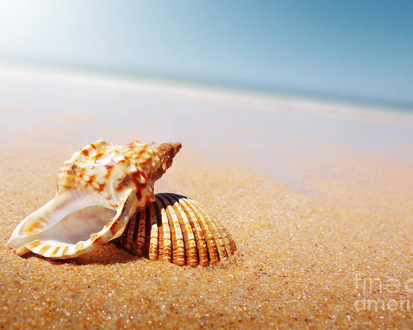 Abstract Poster featuring the photograph Seashell And Conch by Carlos Caetano