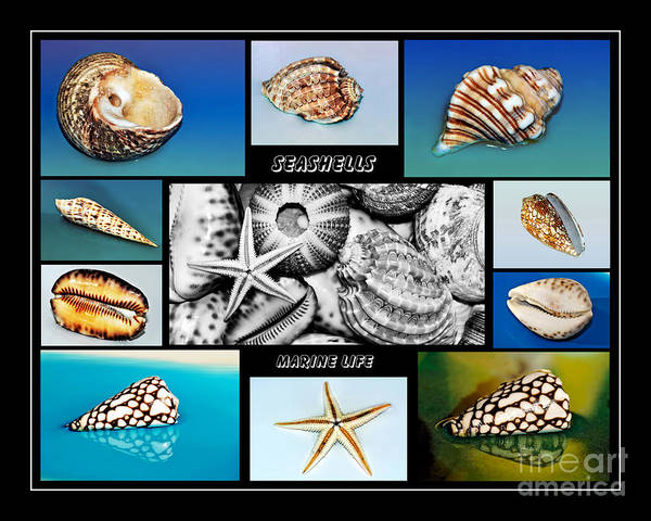 Photography Poster featuring the photograph Seashell Collection by Kaye Menner