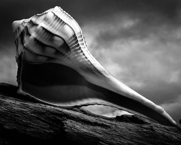 Shell Poster featuring the photograph Seashell Without The Sea 3 by Bob Orsillo