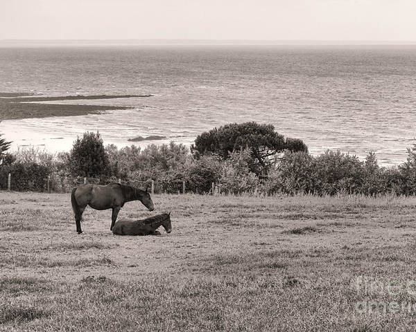 France Poster featuring the photograph Seaside Horses by Olivier Le Queinec