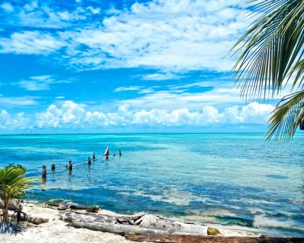 Art Photography Poster featuring the photograph Secluded Beach On Caye Caulker Belize by Mary Stuart