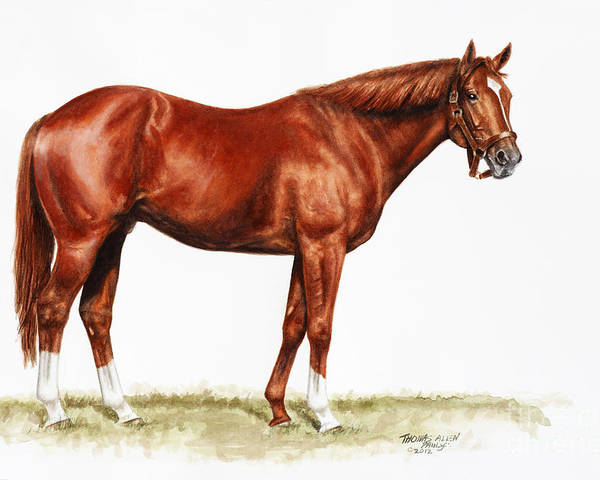 Secretariat Poster featuring the painting Secretariat Study by Thomas Allen Pauly