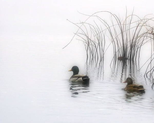 Ducks Poster featuring the photograph Serene Moments by Karol Livote
